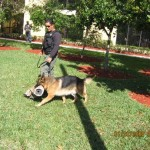 western-boynton-beach_lake-worth_district-6-events_canine-unit-demonstration